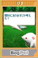 20070612_pi5.jpg