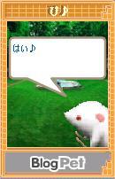 20070612_pi6.jpg
